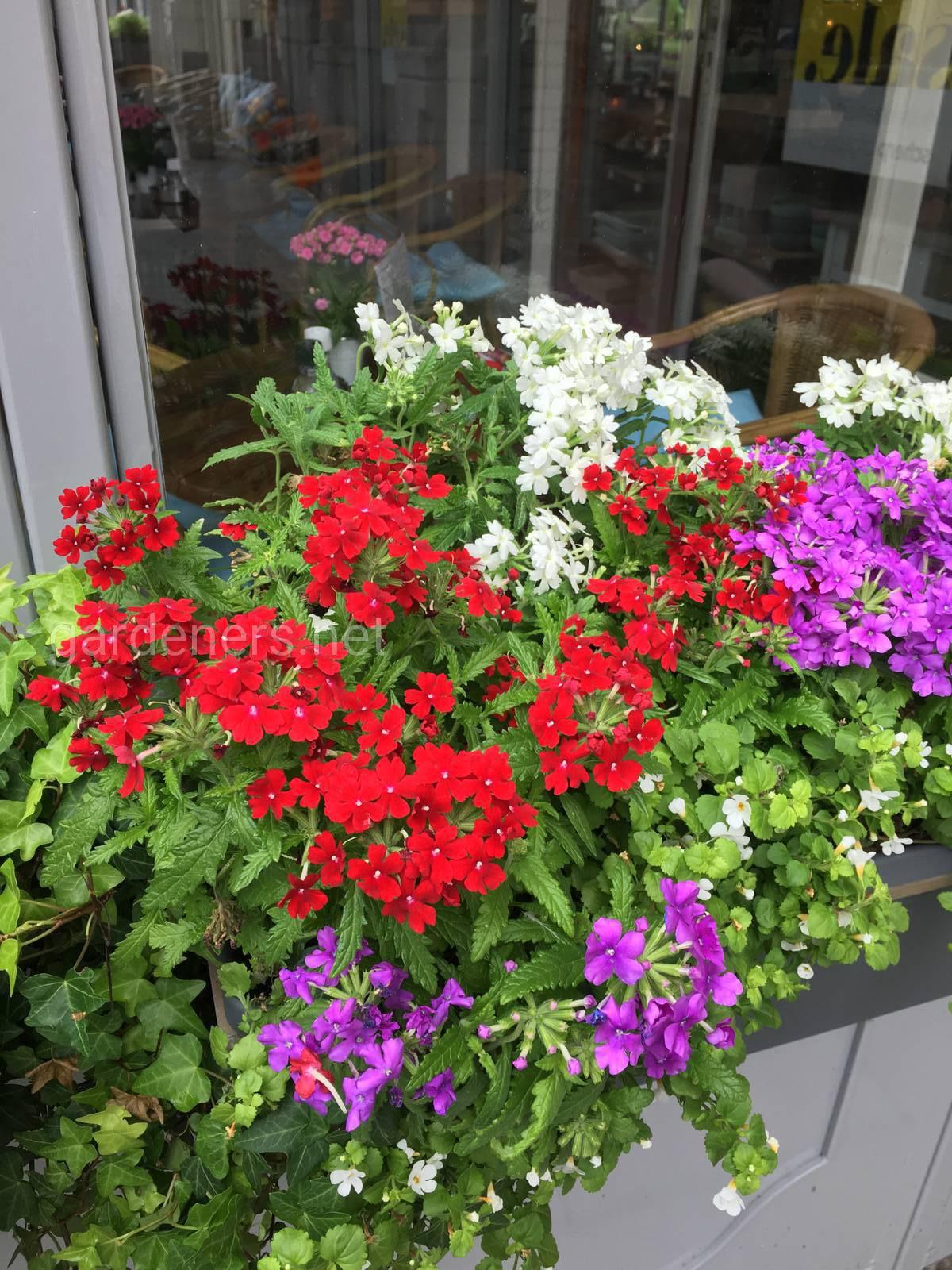 Голландия, цветы