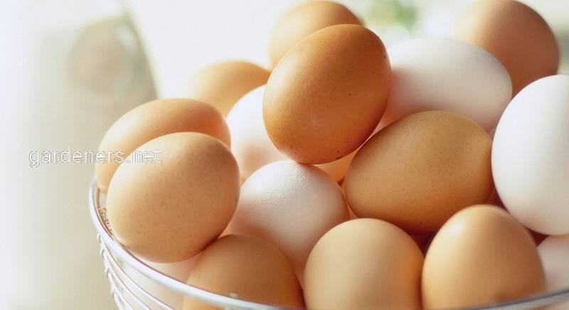 Яйца куриные, упаковка 10 шт
