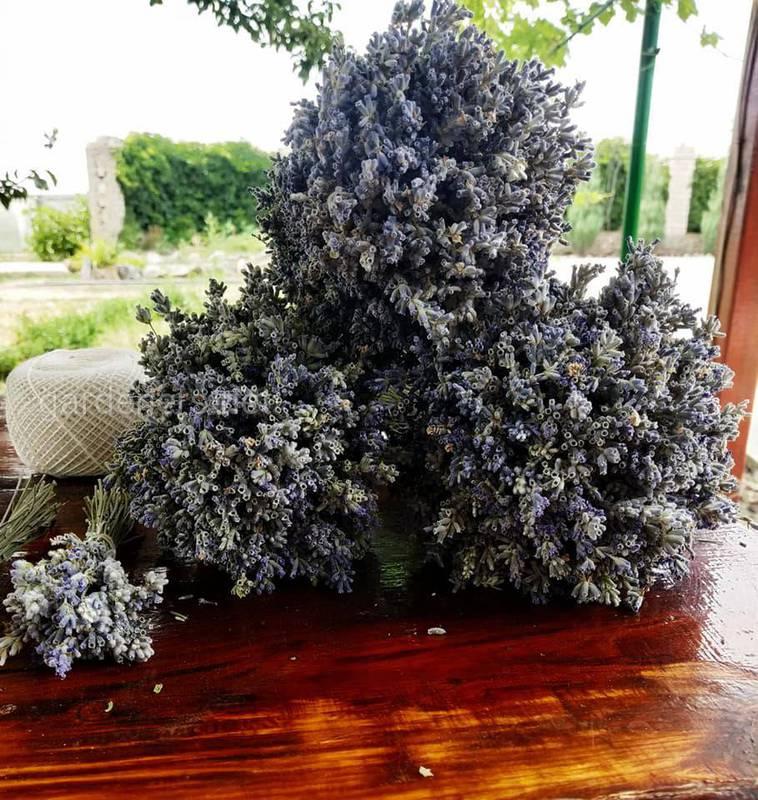 Как вырастить лаванду в домашних условиях?
