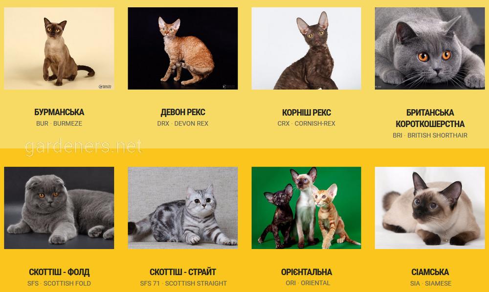 Киев выставка котов
