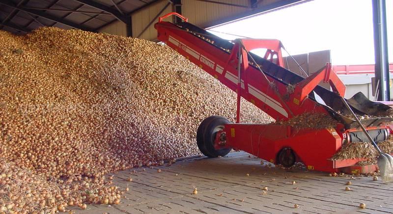 Хранение лука и картофеля насыпью