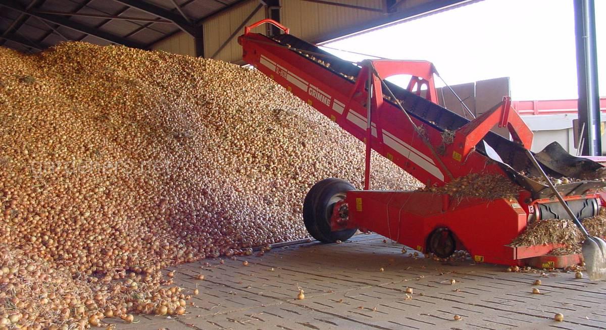 Onion-bulk-gridfloor – копія