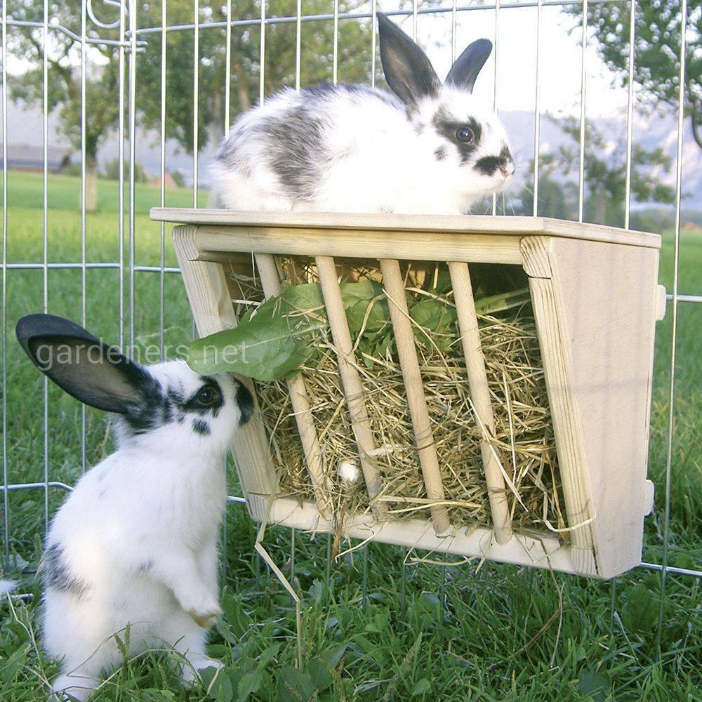 Требования к кормушкам для кроликов