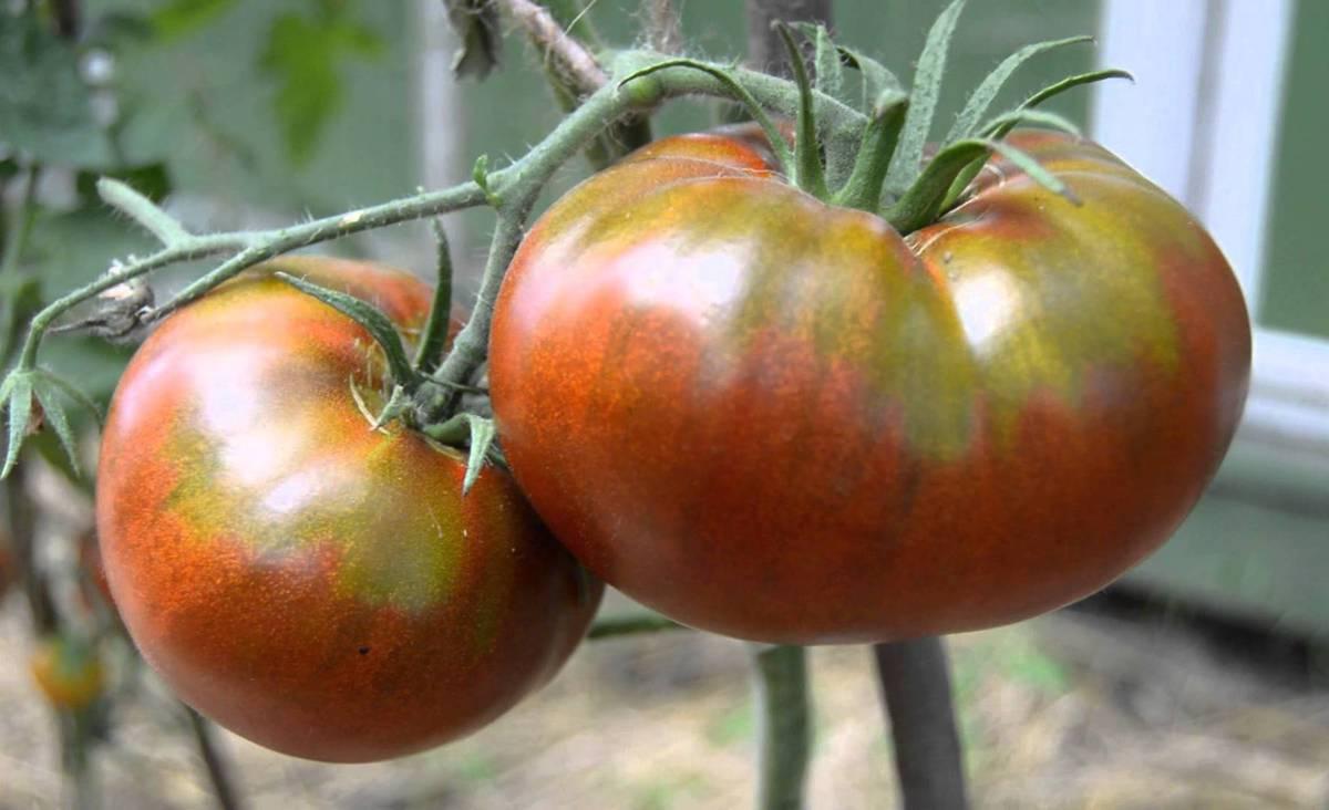 Сорт томата Черный русский