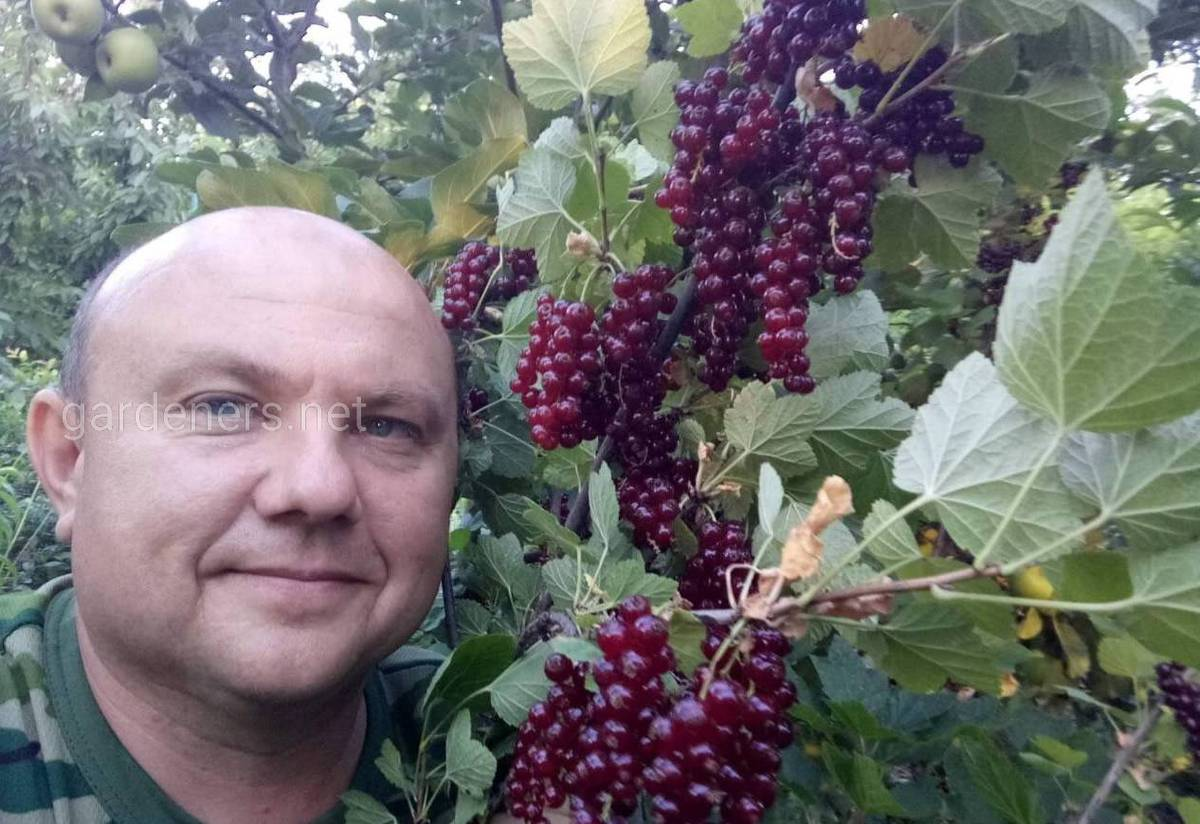 Александр Лунев Коллекционер плодовых деревьев из Кировограда