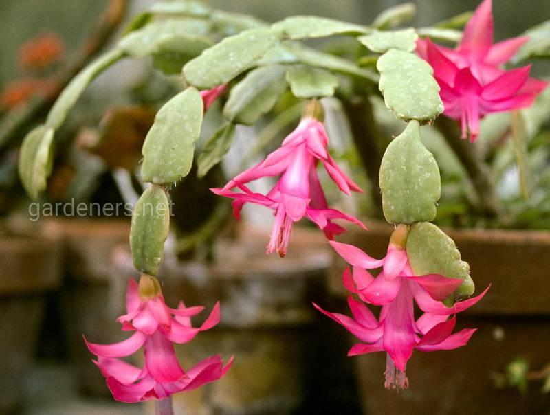 Устойчивые, выносливые и красивые: декоративные растения, которые переживут осень и зиму