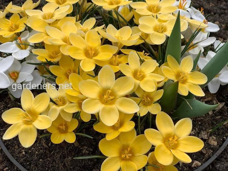 Весна та її «види»