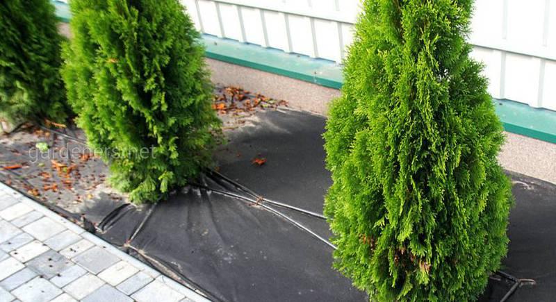 Выбираем материал для укрытия растений на зиму. Особенности процедуры укрытия растений