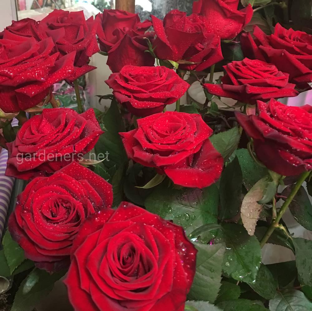 Цветочный магазин Глория 1