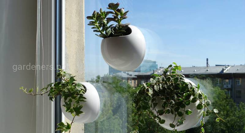 Кашпо WinGarden: вертикальный сад у вас дома