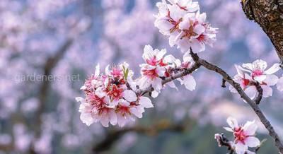Декоративные разновидности орешников, которые станут изюминкой вашего сада