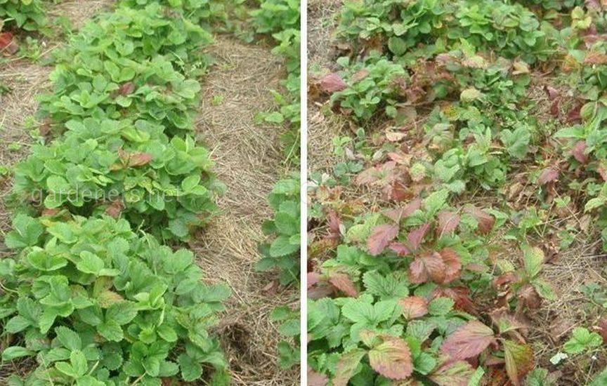 Обработайте растения биопрепаратами