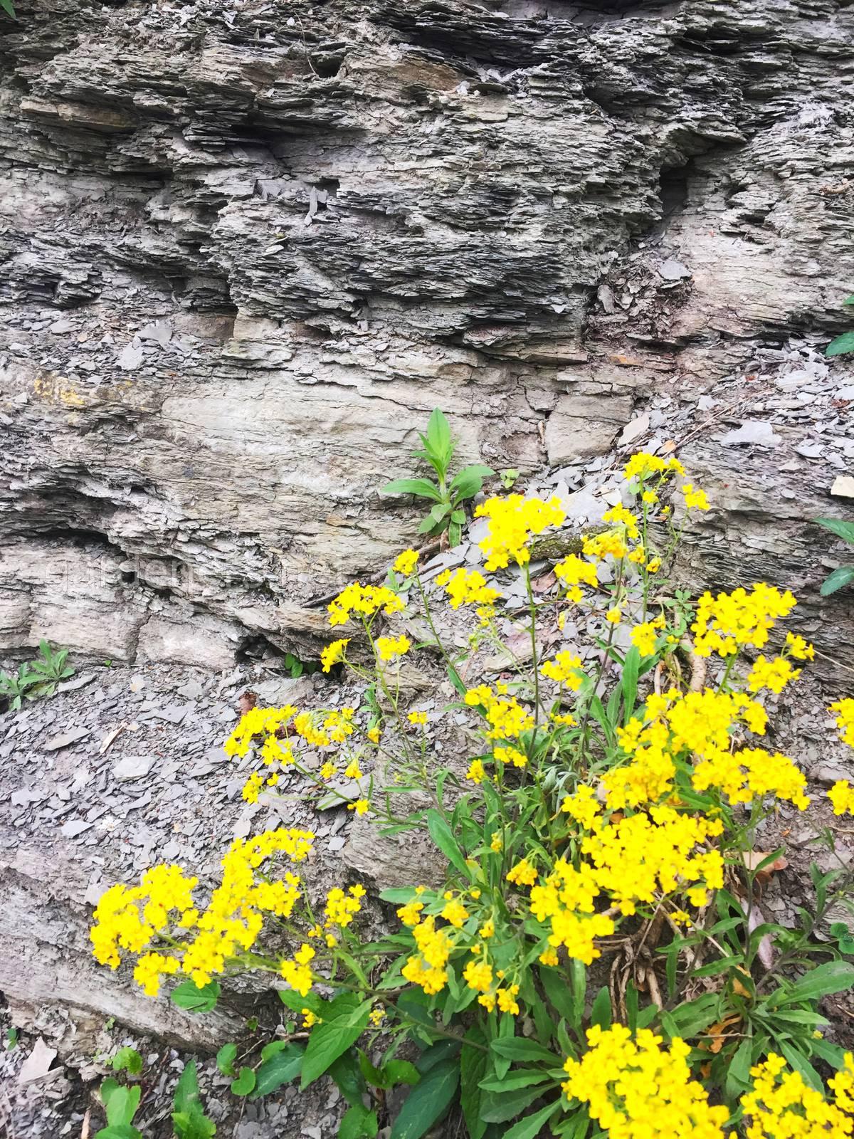 Скалы цветам не помеха