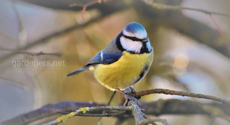 Как привлечь птиц-помощников в сад?