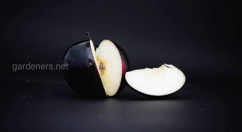 черные яблоки.jpg