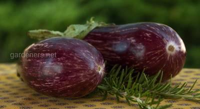 Секреты хорошего урожая баклажан.jpg