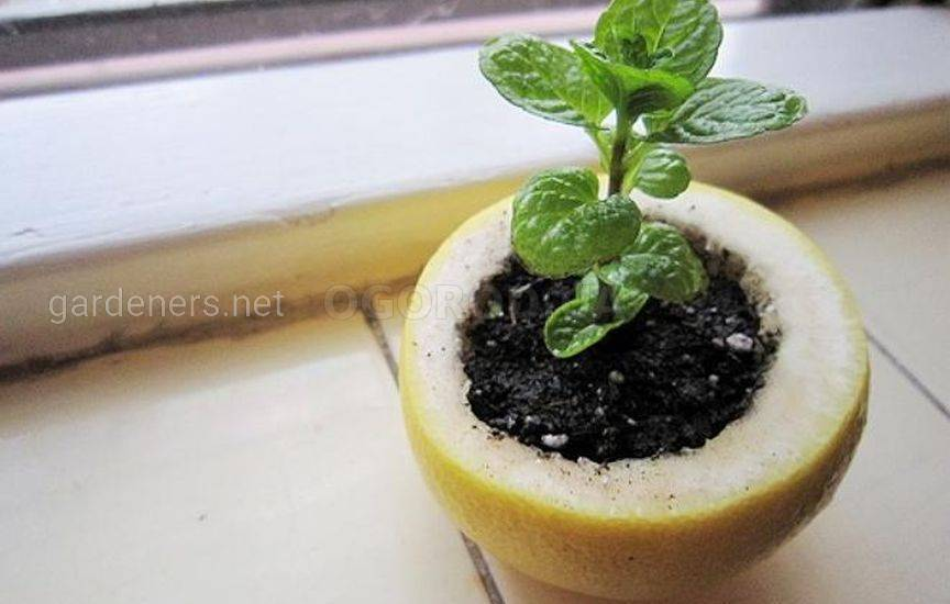 9. Семена и цитрусы