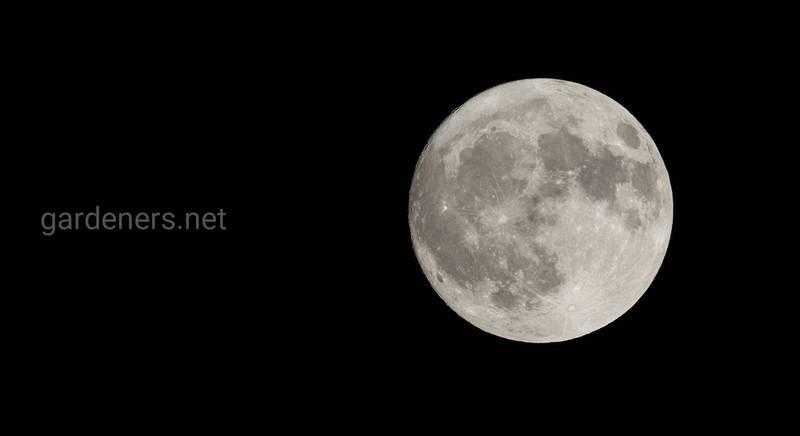 Лунный календарь против сорной травы