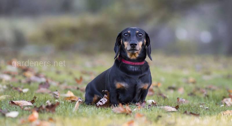 Самые лучшие породы собак для охоты