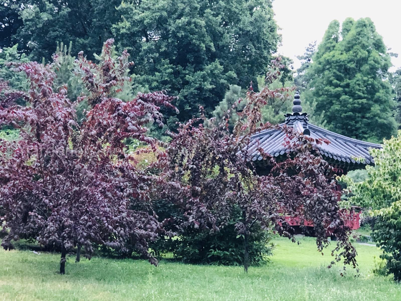 Корейская пагода в Ботаническом саду им Гришка