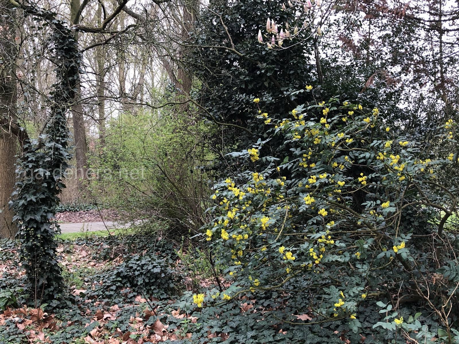Парк в южном Амстердаме
