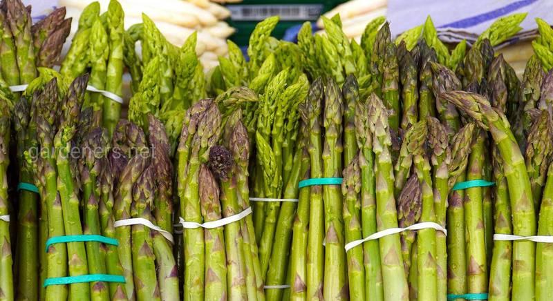 Как правильно заморозить спаржу и сохранить пищевую ценность диетического продукта?