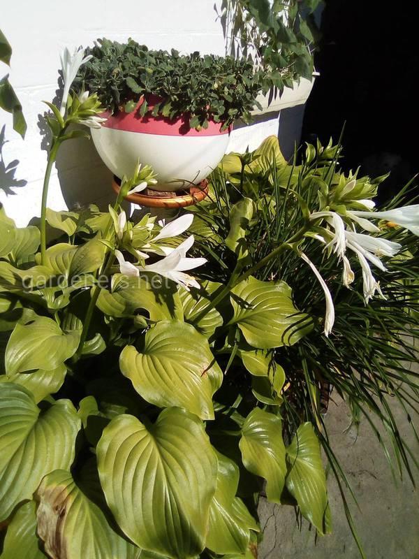 Квіти: що та де садити