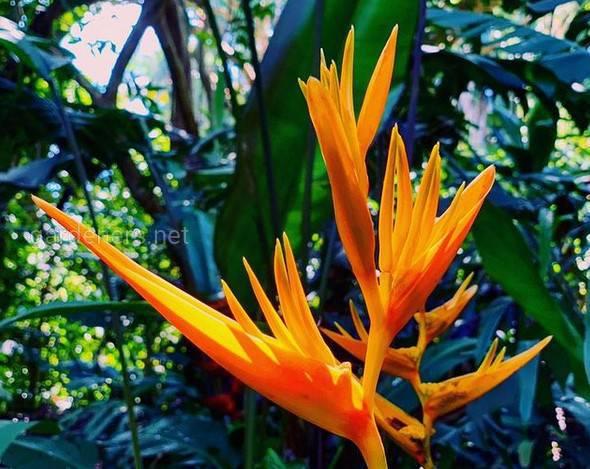 Які екзотичні кімнатні рослини можуть перетворити ваш інтер'єр у справжній маленький рай?