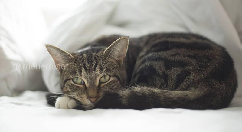Кішка захворіла: як допомогти улюбленцю