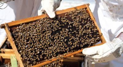 мед в Египте.jpg