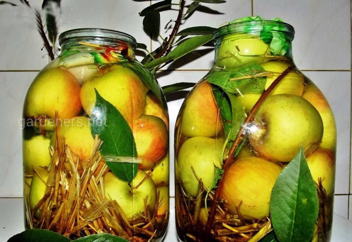 моченные яблоки