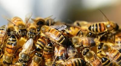 подкормка пчел.jpg