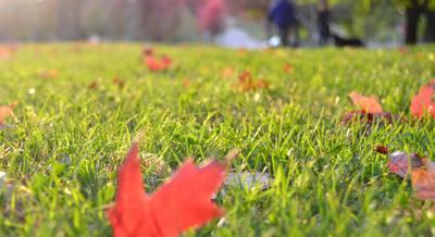 Осенняя подготовка газона к зиме: ТОП-7 рекомендация по уходу за газоном