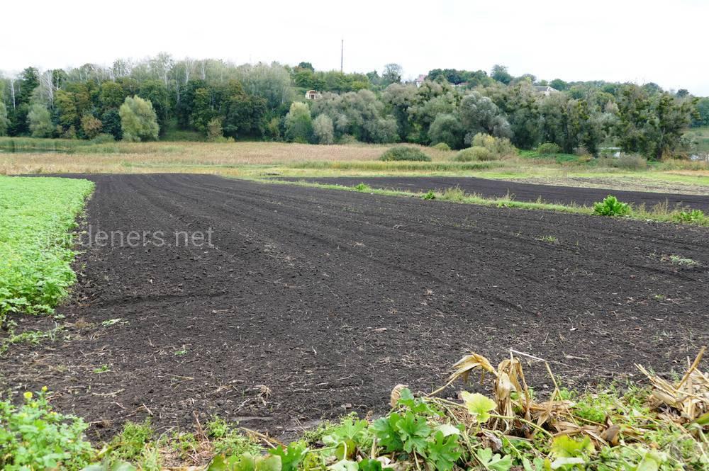 чернозем почва