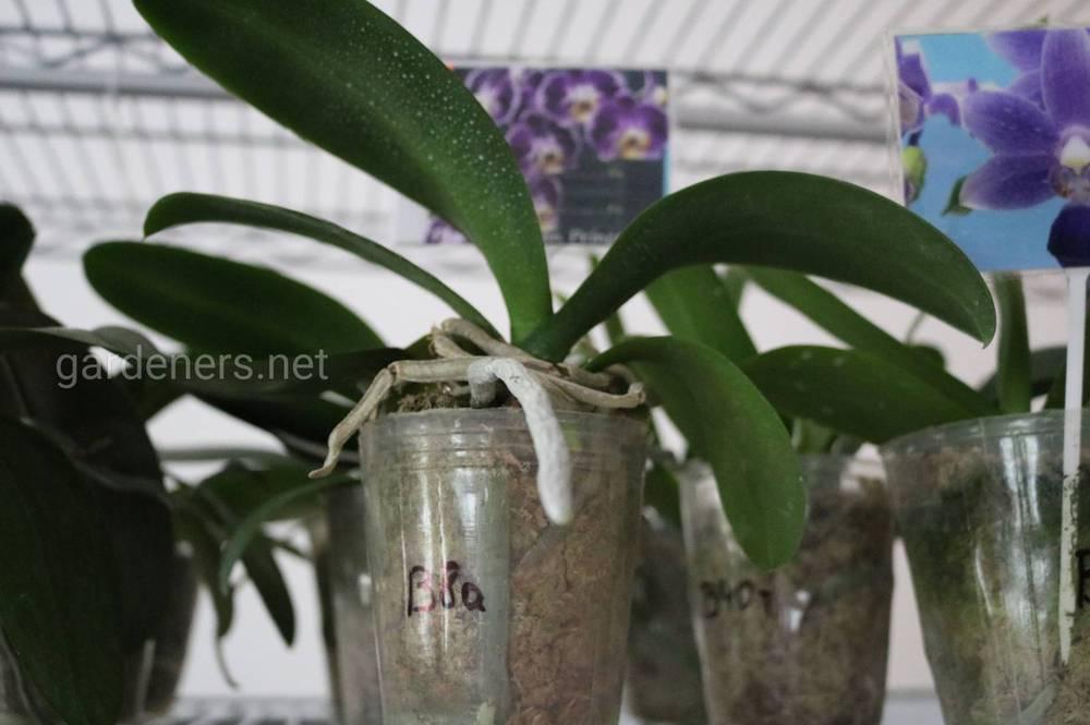 OrchideaShop