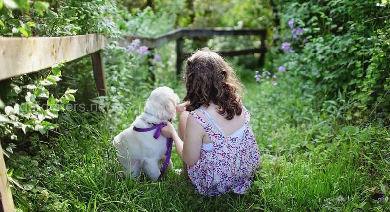ТОП-15 пород собак для ребенка: описания характера и повадок животного, фото
