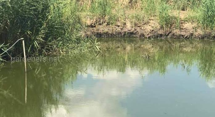 Влияние хлореллы на качество воды в прудовом рыбоводстве
