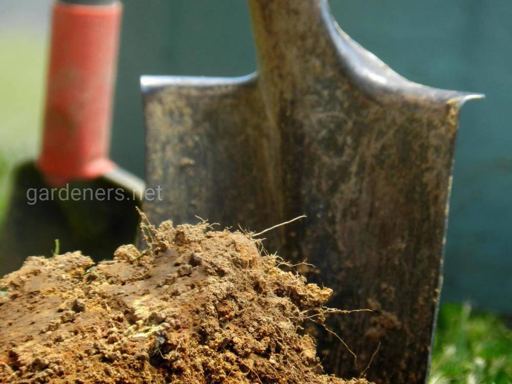 Правила внесения удобрений осенью