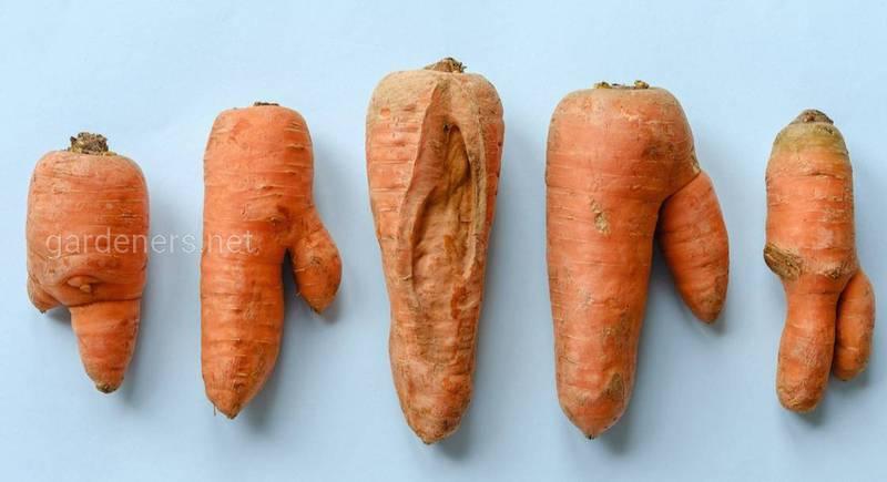 GettyImages-ugly-vegetables-serggn