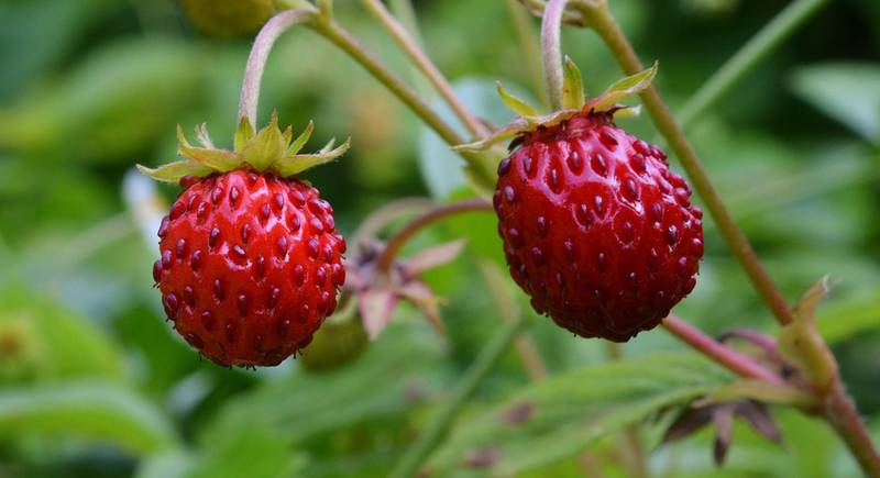 wood-strawberry-1479575_1920.jpg
