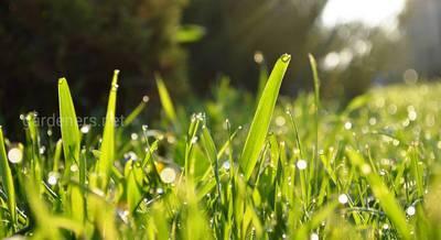 Правила идеального газона