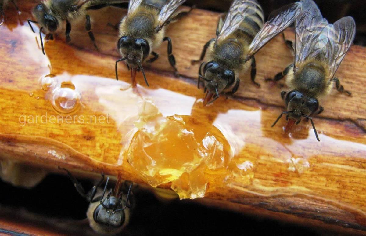 как и зачем подкомить пчел