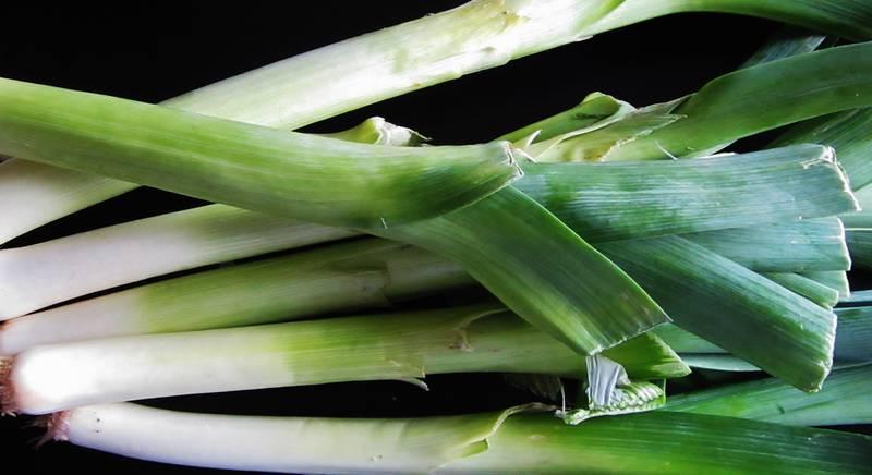 Посадка лука-порея рассадой и семенами в открытый грунт. Уход за луком-пореем