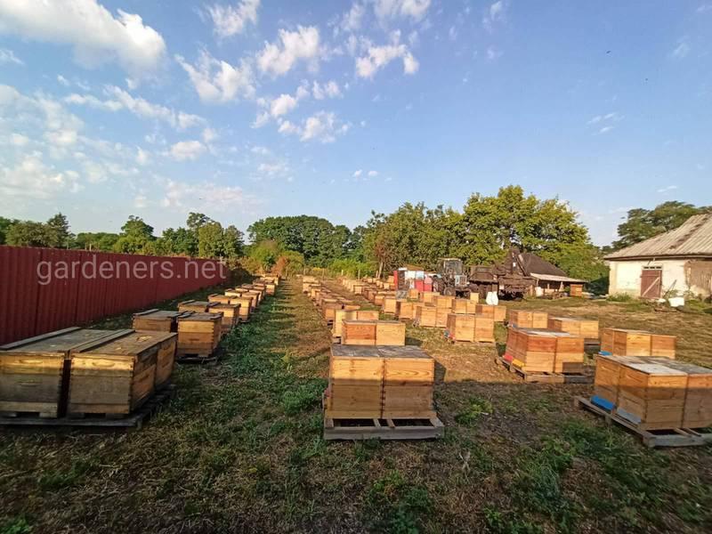 Как применение пестицидов наносит больщой ущерб пчеловодству?