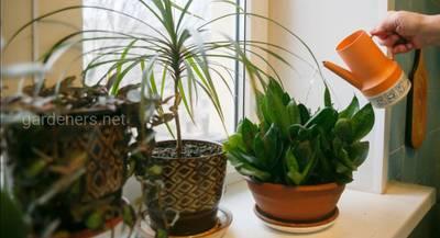 Комнатные растения осенью