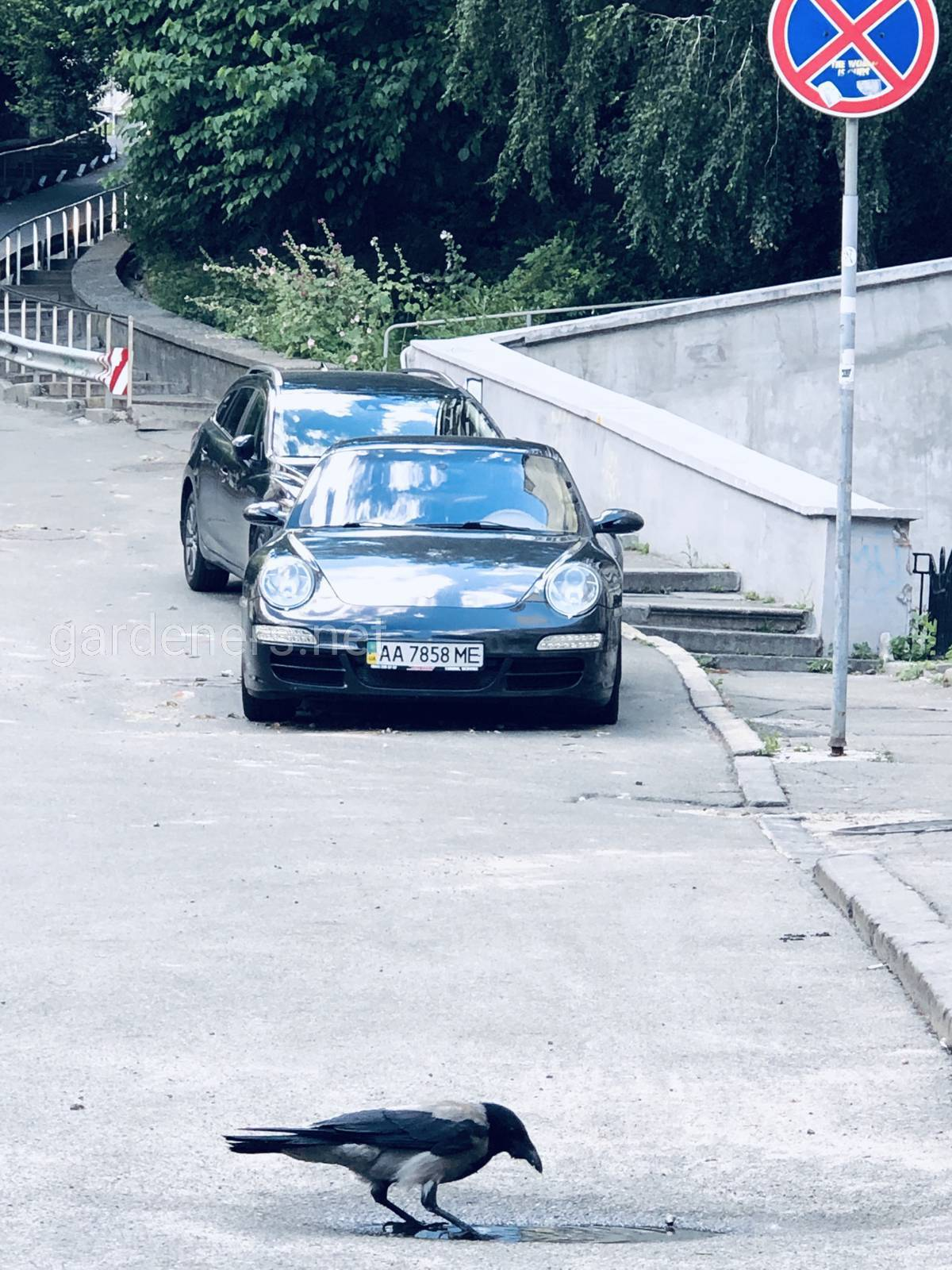 Ворона, Porsche, Исторический Киев