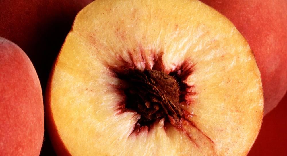 Лучшие сорта персиков с фото, названиями и описанием