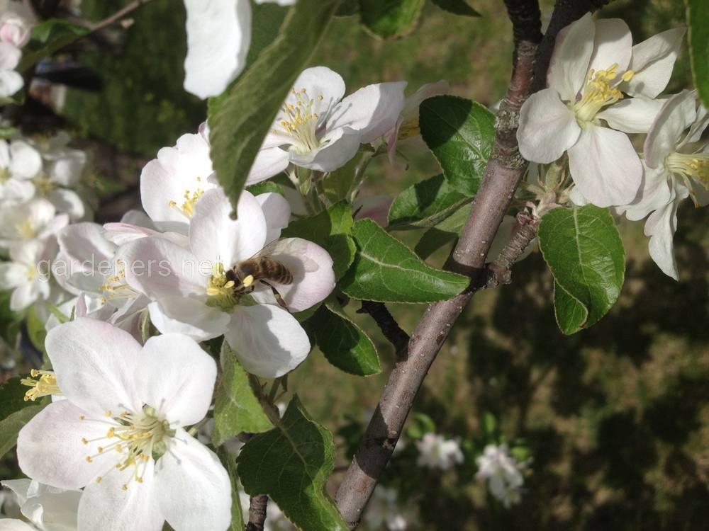 Способи покращення кормової бази Бджільництва.JPG