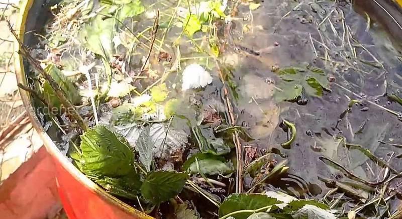 Компостні чаї: природне живлення ваших рослин