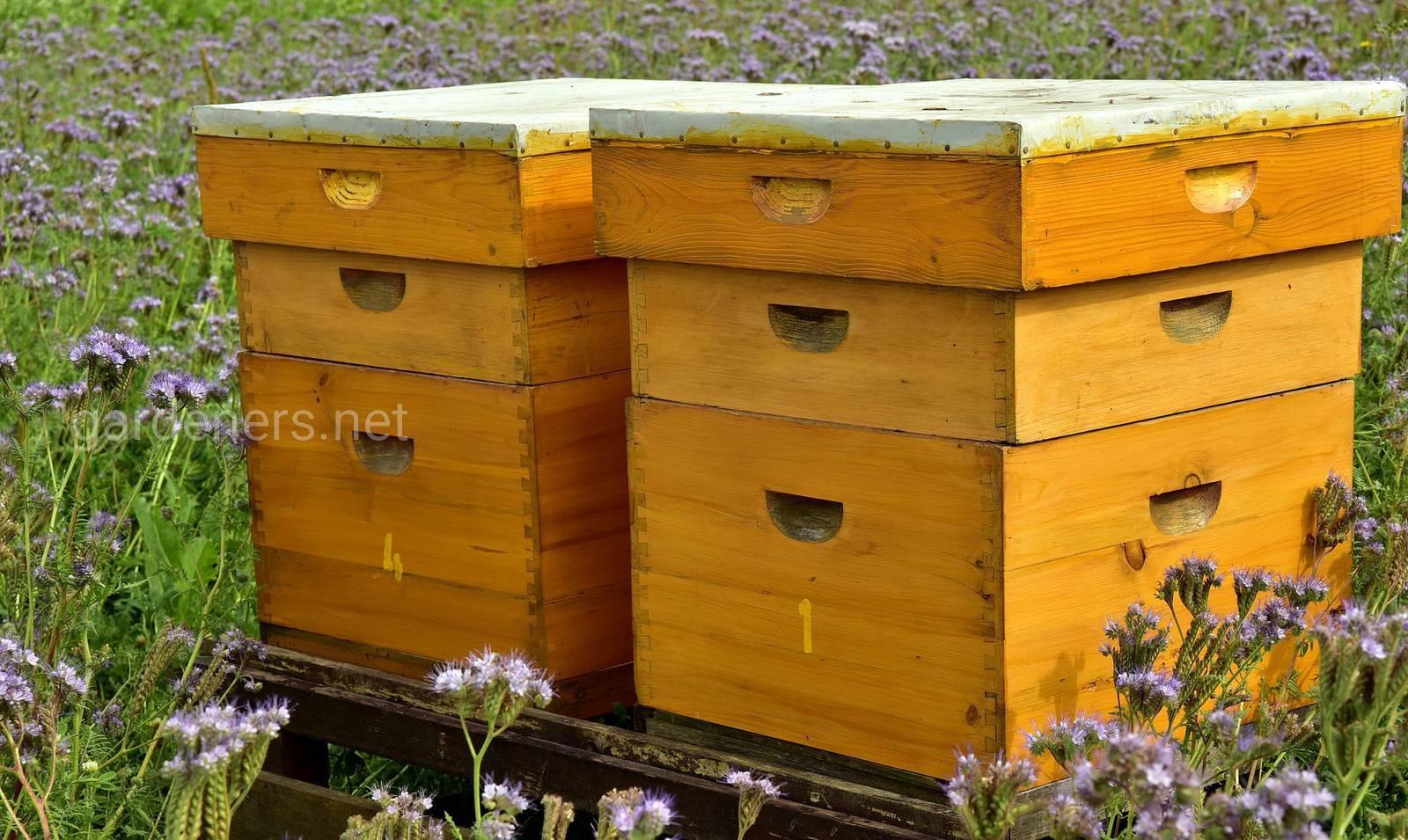 улья пчел.jpg